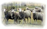 Shepherding Ministry Priorities